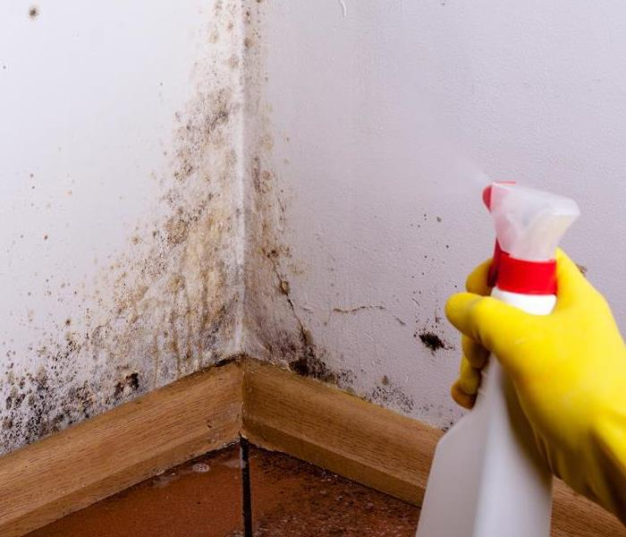 Mold Remediation Summer Mold Prevention in Norwich / Windham County