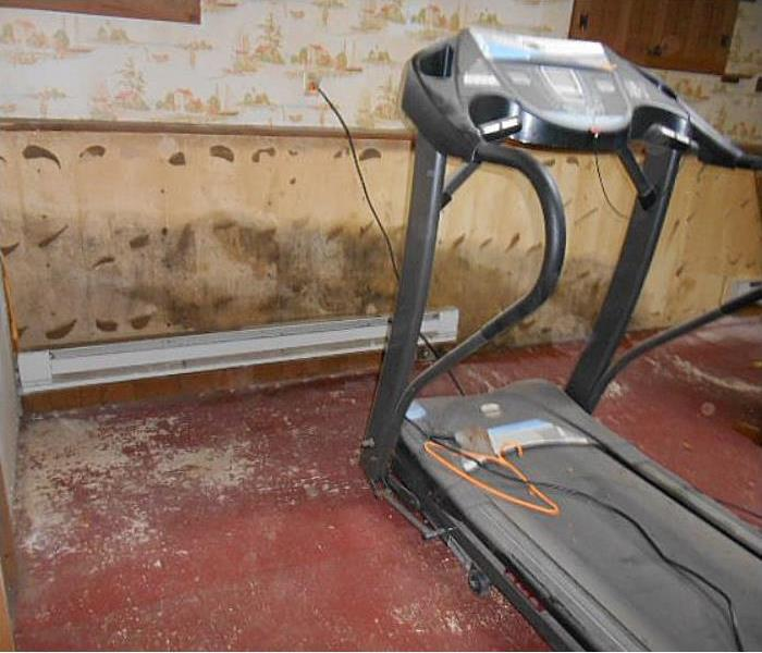 Mold Remediation How to Spot Mold In Your Home